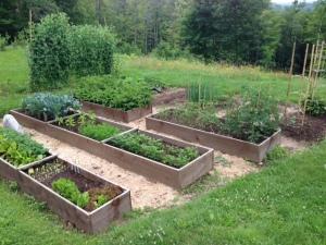 Garden 070915 IMG_0210